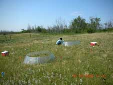 effects on soil nitrogen cycling in alberta Related with one another, such as litter biomass and species effects on soil  temperature during the winter  chemical processes, including n cycling (wedin  and.